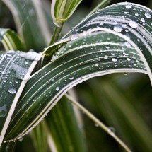 Raindrops_on_Ornamental_Grass_by_Bonavista_Tim